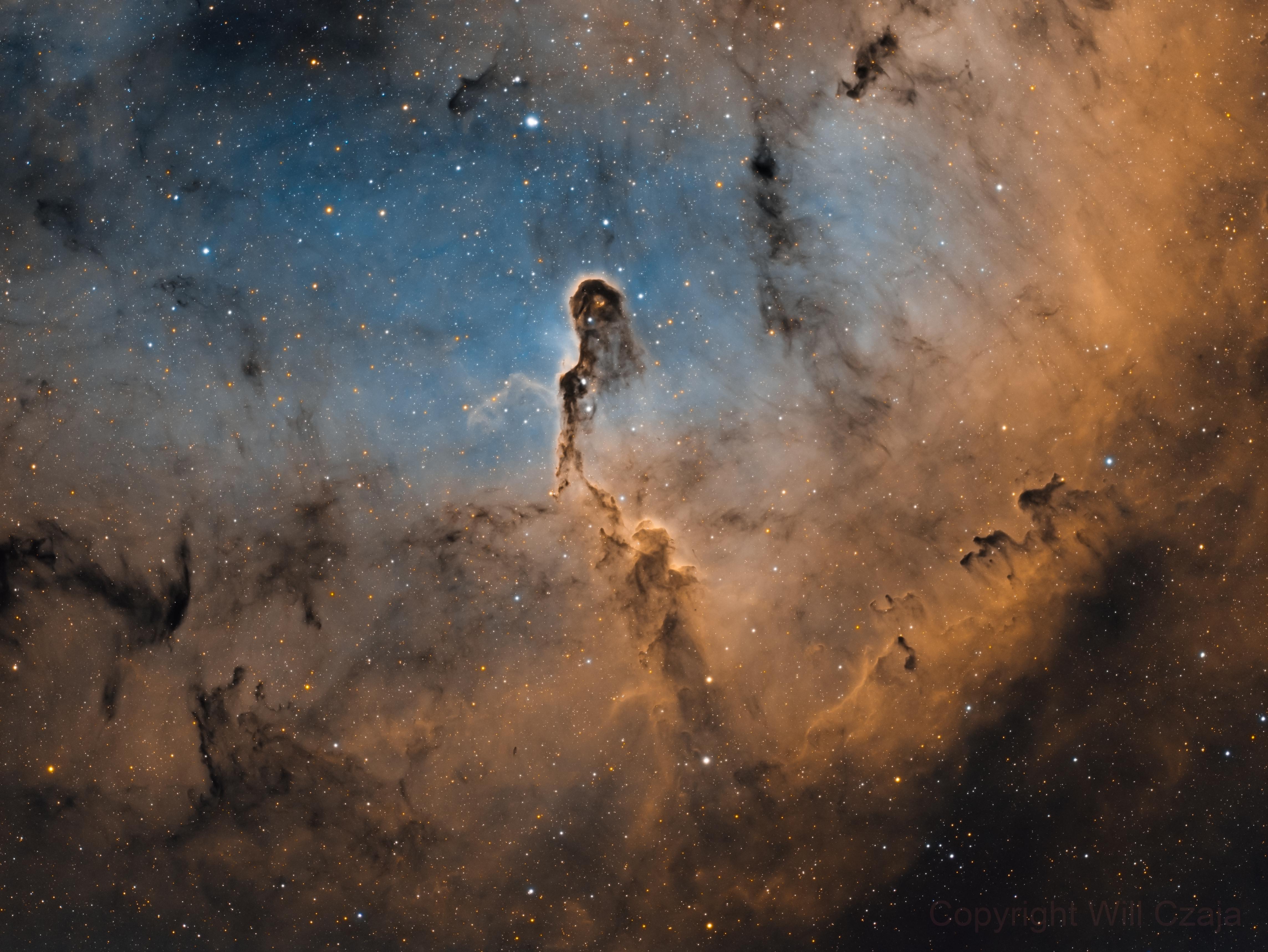 Elephant's Trunk Nebula (IC 1396),                                Will Czaja