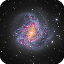 Southern Pinwheel Galaxy with faint Tidal Stream,                                Terry Robison