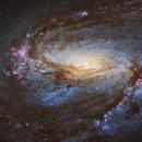 Messier 66 (M66, NGC3627) by Hubble,                                Leo Shatz