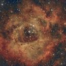 Rosette Nebula from Suburban Alley,                                Scott Denning