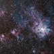 NGC 2070 - Tarantula Nebula (DSS v1),                                Martin Junius