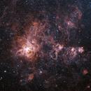 Tarantula Nebula (HOO),                                Bruce Graham
