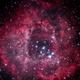 Rosette Nebula HaRBG,                                Joshua Millard