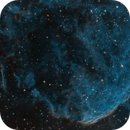 The Jellyfish (aka God's bath sponge),                                Don Walters