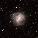 M83 Southern Pinwheel Galaxy,                                Ian Stephenson