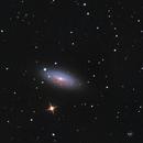 NGC 2841 Tiger Eye on Lacerta 250 cropped,                                Piet Vanneste