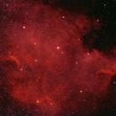 NGC7000,                                Patric Benedetti