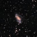 NGC 2146,                                Luigi Ghilardi