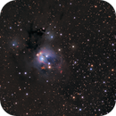 Colourful NGC7129,                    Olly Penrice