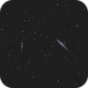 The whale galaxy,                                OrionRider