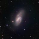 Messier 66 (a.k.a. NGC 3627) - LRGB,                                Jian Yuan Peng