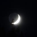 Mondsichel über der Baumkrone,                                Silkanni Forrer