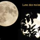 La Lune des moissons,                                Pouget
