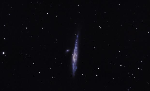 NGC-4631, Whale Galaxy,                                Ray Morris