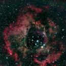 NGC2237 Rosette Nebula,                                George Pappayliou
