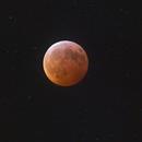 January 2019 Lunar Eclipse,                                  Nico Carver