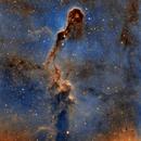 Elephant's Trunk Nebula,                                  Gary Opitz