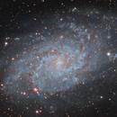 M33 - Triangulum Galaxy,                                Dhaval Brahmbhatt