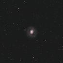 M94 Galaxy,                                Nicolas Kizilian