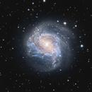 M 83 - Southern Pinwheel,                                Rhett Herring