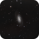 NGC 2903 LRGB,                                Steve Ibbotson