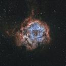 Rosette Nebula,                                Dominik Ehrhardt