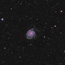 M101 (Pinwheel Galaxy) & others,                                Mark Killion