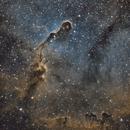 Elephant's Trunk Nebula (IC 1396),                                Rick