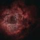 Rosette Nebula,                                404timc