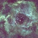 C 49 Rosetta Nebula-Ha-SHO-Meade 80 ED triplet-Orion flattener-ASI 1600-MM-Pro-new processing,                                Adel Kildeev