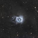 Iris Nebula,                                Reg Pratt