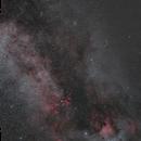 Cygnus in wild field (50mm),                                -Amenophis-