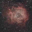 Rosette Nebula,                                Jim Stevenson