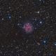 IC 5146 (Cocoon-Nebula),                                Sven Beckerwerth