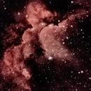 Wizard Nebula,                                TOM DAIGON