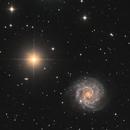 NGC 3184,                                Roger Liu
