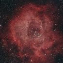 NGC2244 Rosettennebel,                                Enrico