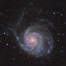 M101 - The Pinwheel Galaxy,                                robo9981
