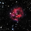 IC 5146 - Cocoon Nebula,                                Paul Ricker