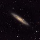 NGC 253 galassia a spirale in Sculptor,                                Giuseppe Nicosia