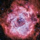 Rosette Nebula, Caldwell 49,                                Björn Hoffmann
