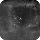 The Rosette Nebula, NGC 2244 in OIII,                                Madratter