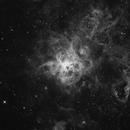 NGC 2070 (Tarantula Nebula) in H-Alpha ,                                Chris85