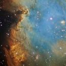 NGC 2174 – Monkey Head Nebula,                                Richard Francis