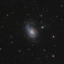 NGC 772 (Arp 78) in Aries,                                Steve Milne