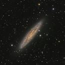 NGC253 Sculptor Galaxy,                                Jerry Macon