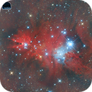 NGC2264 Christmas Tree,                                Fernando Peci López