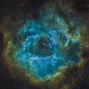 NGC 2239: The Rosette in SHO,                                Glenn Diekmann