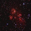 NGC-6334  THE CAT'S PAW NEBULA,                                Alfredo Vargas