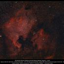 The North America Nebula and the Pelican Nebula,                                Dominique Callant